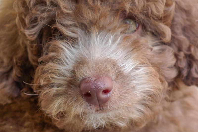 Migliora la mia foto #33: fotografare il cane con il cellulare