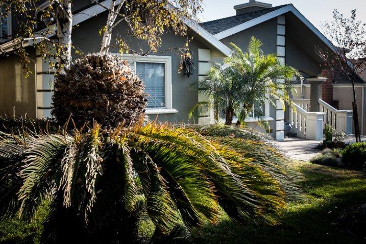 Giardino anteriore, Burbank, California