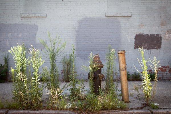 Gowanus. Brooklyn, NYC - Street Photography