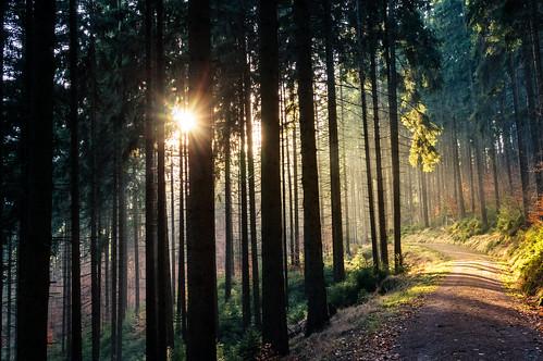 immagine di una foresta