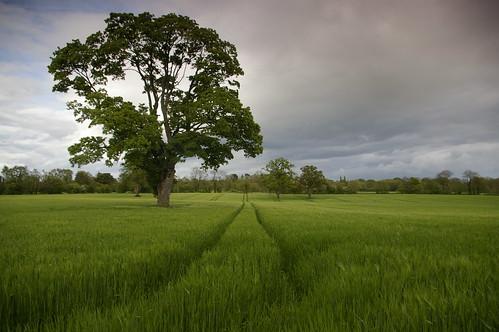 immagine paesaggio