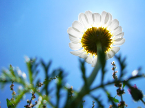 In the Shadow of a Flower by Hamed Saber, on Flickr
