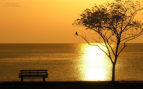Lonely in golden place! by khalid almasoud, on Flickr
