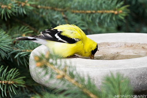 Sneaking A Drink by James Marvin Phelps, on Flickr