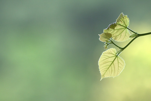 Bokeh chlorophyllien.