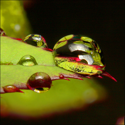 """~ Drip - """"?"""" ~ by ViaMoi, on Flickr"""