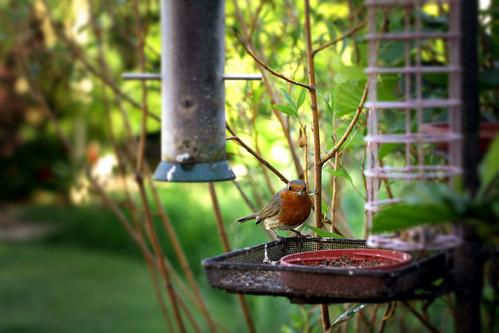 Hey Robin by Ben K Adams, on Flickr