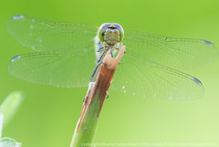 Hello, Mrs Dragonfly! Nice to meet you.