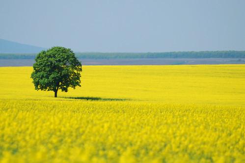 immagine di paesaggio naturale