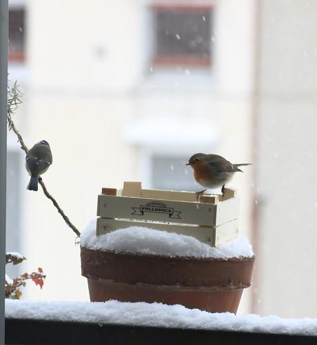 ... do you now? Birds? by leonardo4it, on Flickr