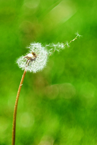 Blowing in the wind. by kaybee07, on Flickr