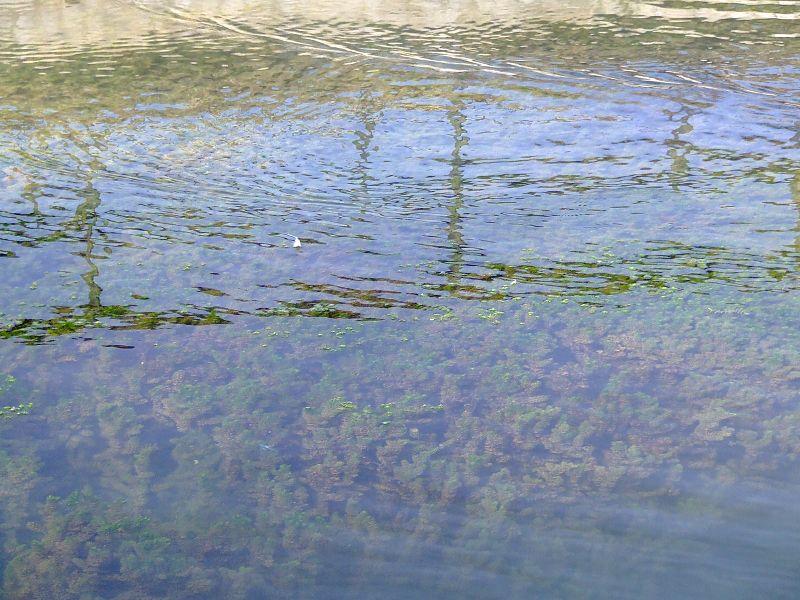 Filtro polarizzatore per rimozione riflessi | Immagine tratta da Wikipedia