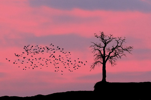 Late Evening Winter Flight by TexasEagle, on Flickr