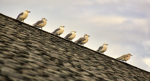 Line Abreast by chefranden, on Flickr