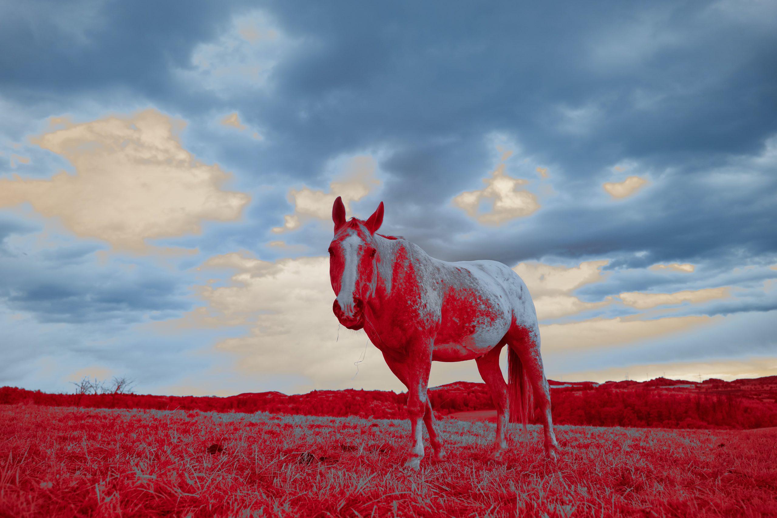 Fotografia a infrarossi: la guida completa